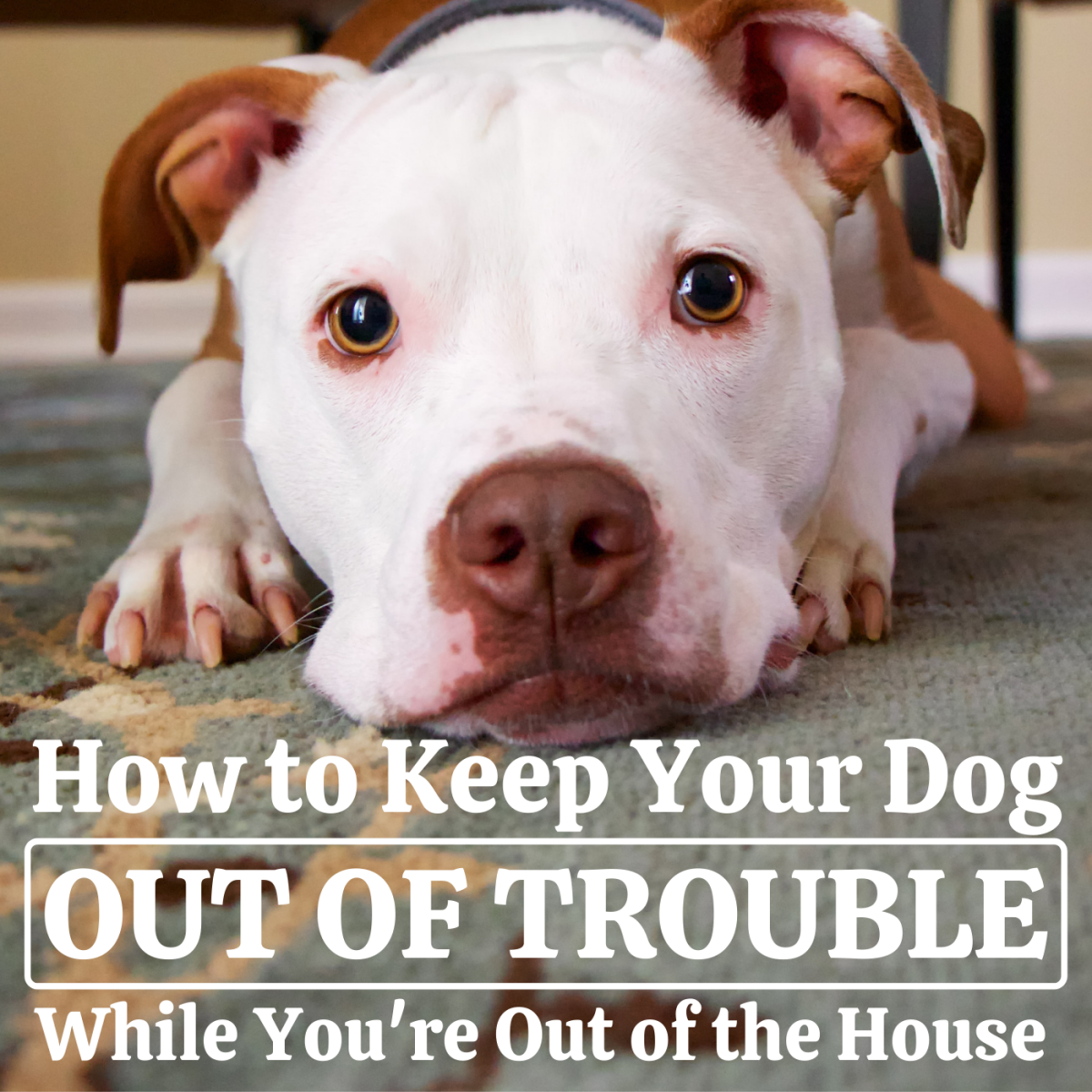 These eight smart moves can help keep your dog out of trouble even when you're not around.