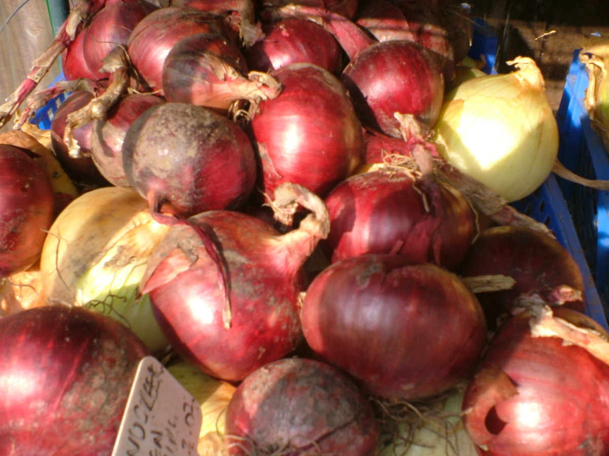 Grow winter onions - Tips