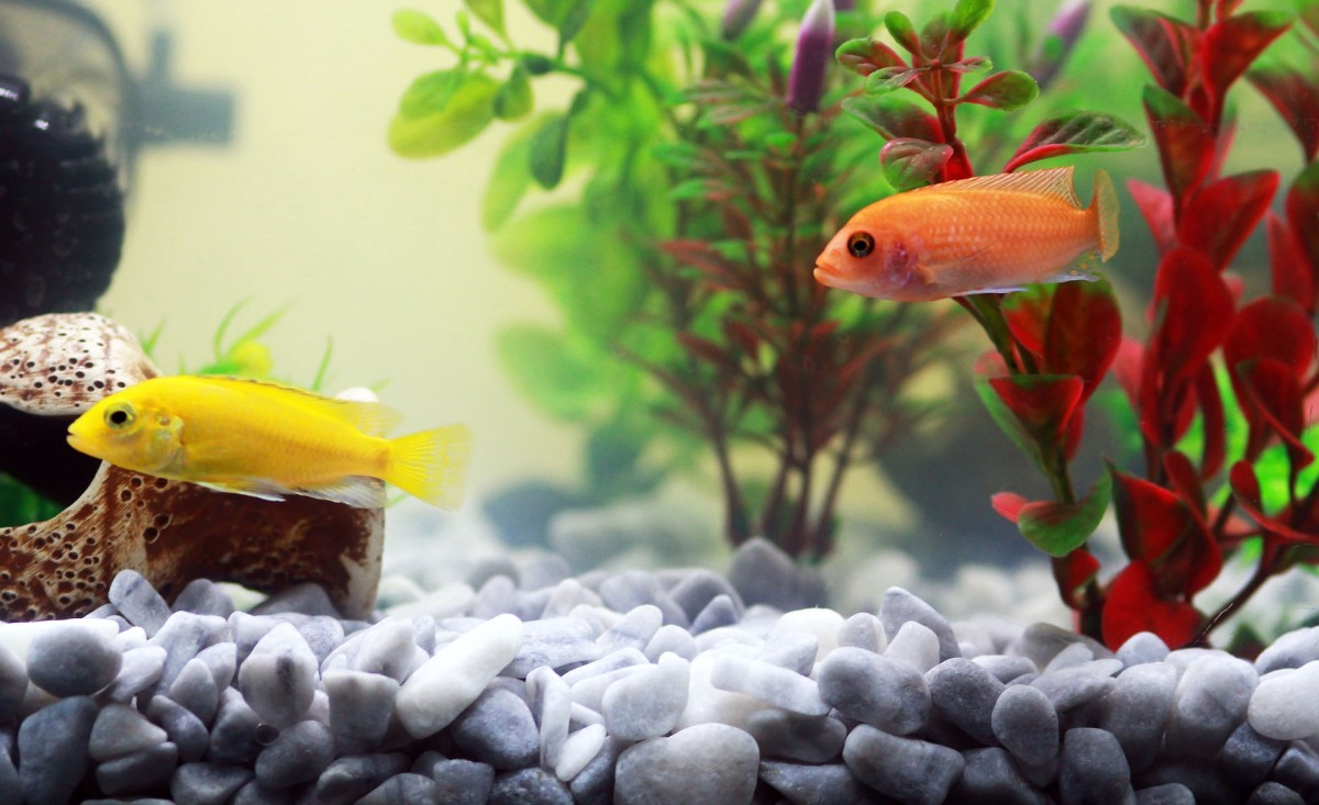 Aquarium Fish Health: How NOT to Kill Your Fish.