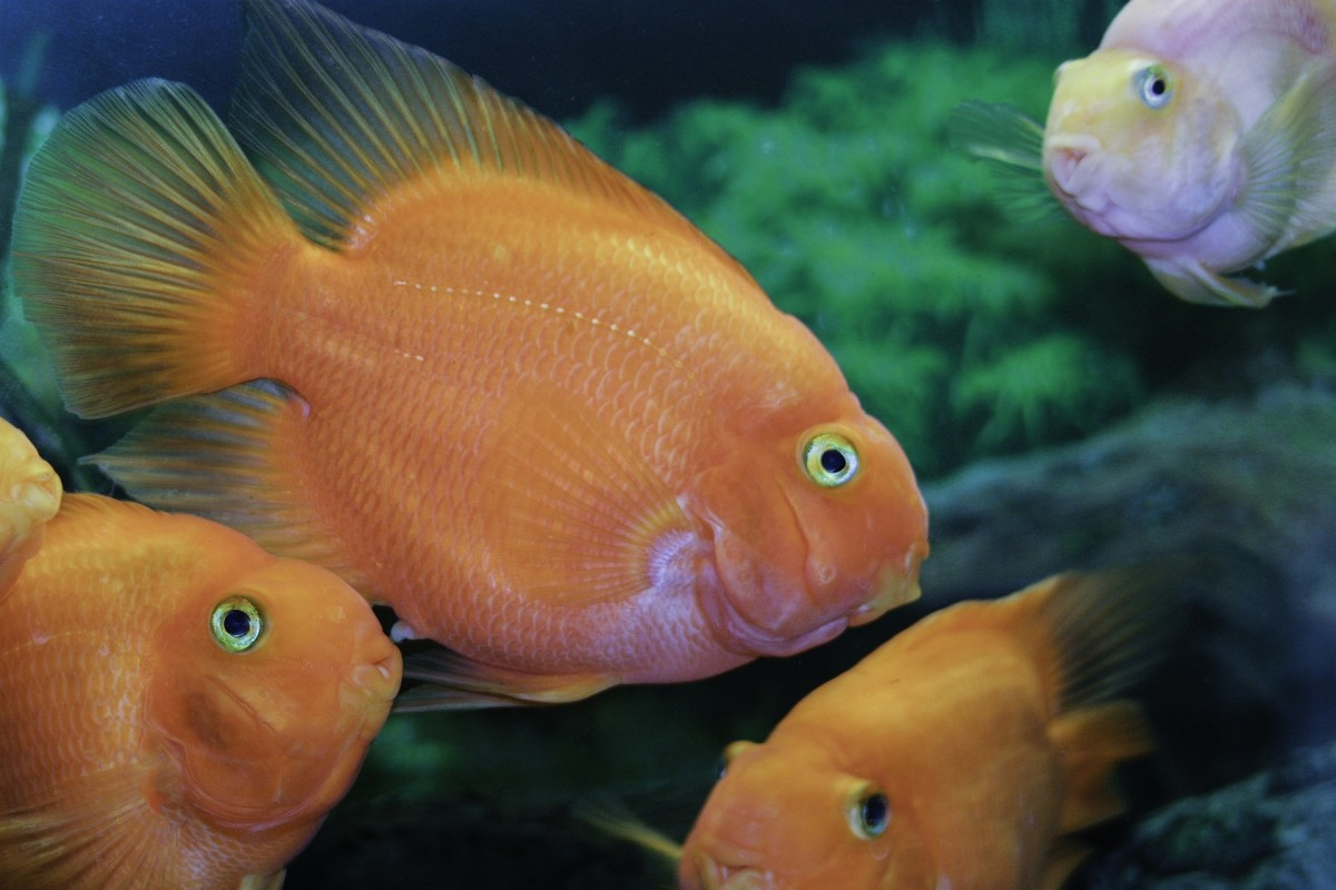 Careful temperature management is especially important with tropical fish.