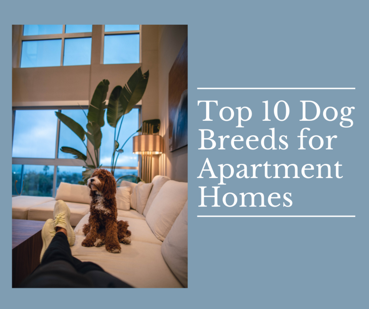 These breeds are great for apartment living!