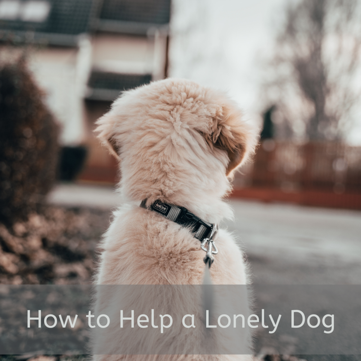 Dogs get lonely, too.  Learn how to help them cope.