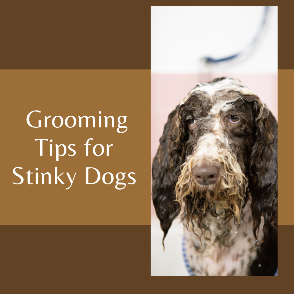 Learn how to keep your dog's stinky odor at bay.