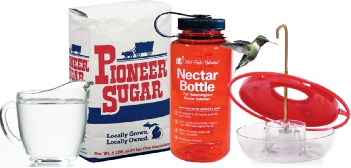 The recipe for nectar (sugar water) should four parts hot water to dissolve the sugar.