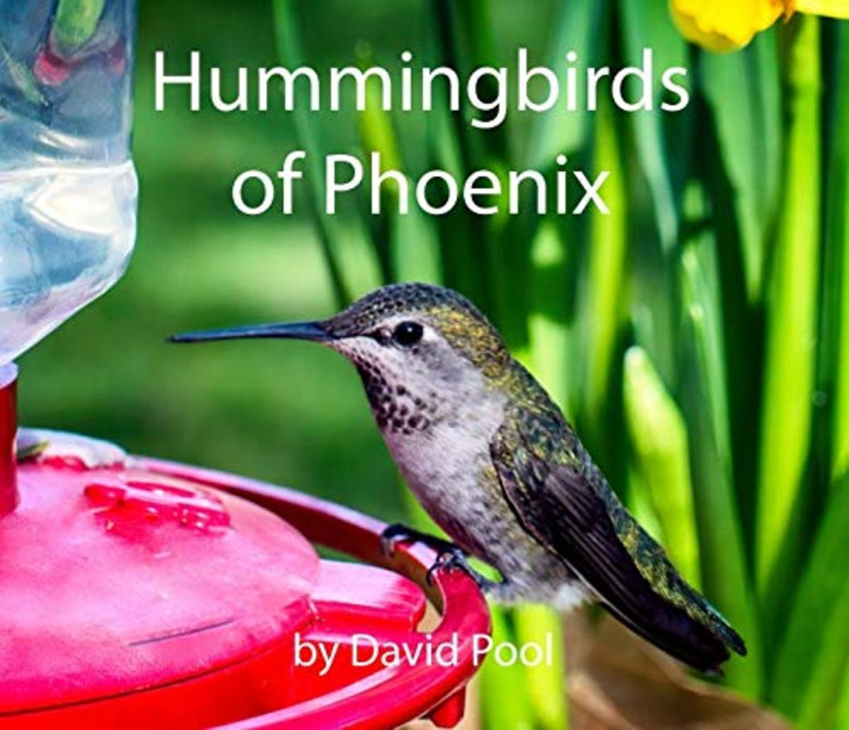 The greatest diversity of hummingbird species is found along  from western  to southern Arizona.