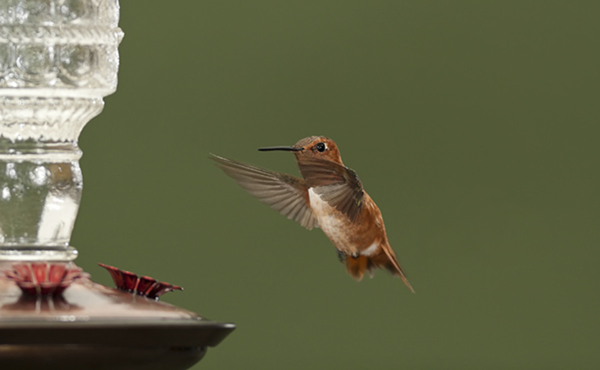 Tips to placing your hummingbirds for the new feeder.