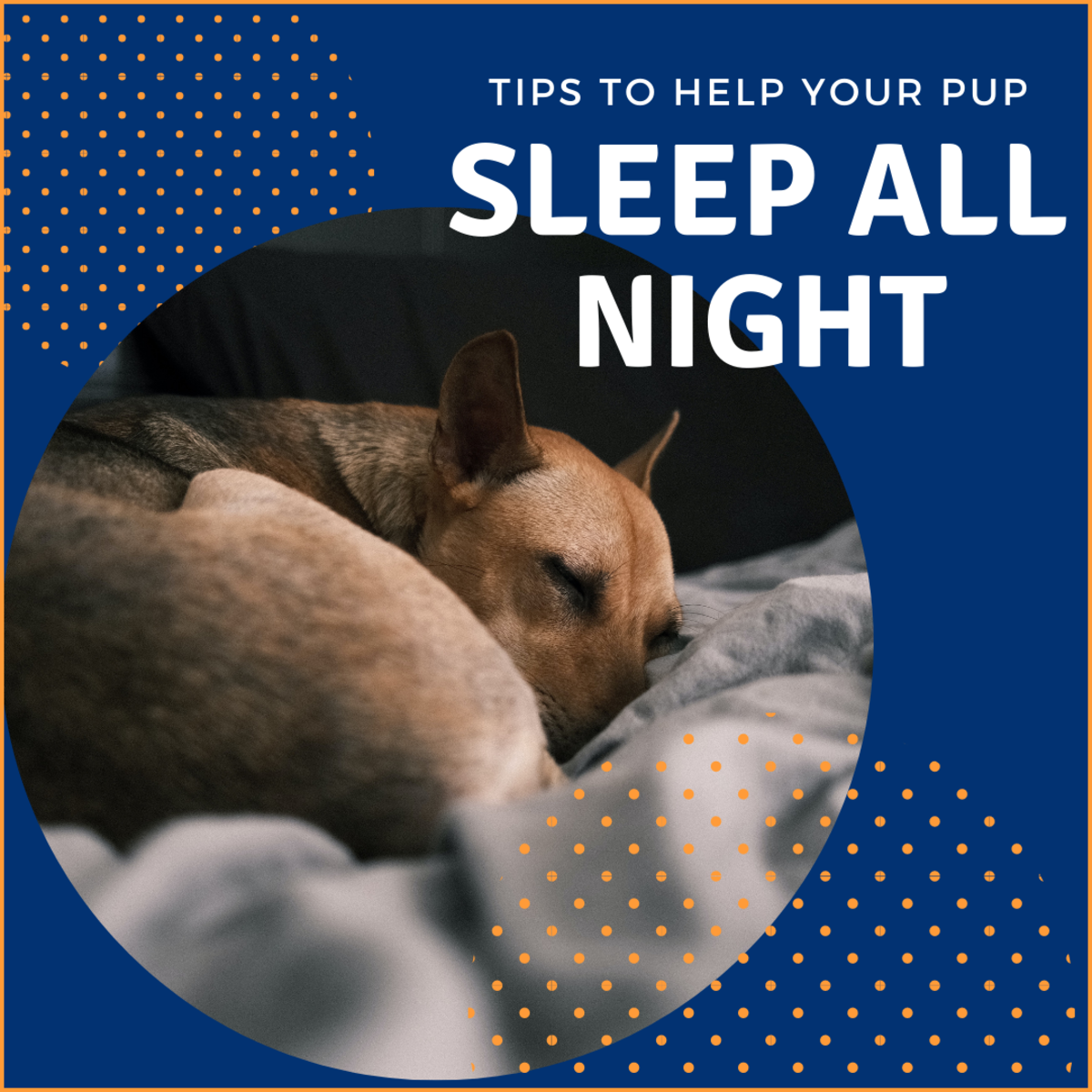 Learn how to help your pup sleep better at night so that you can too!