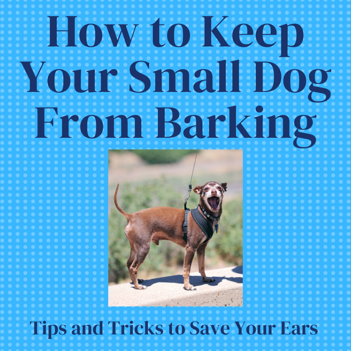 How to Keep Your Small Dog From Barking Too Much