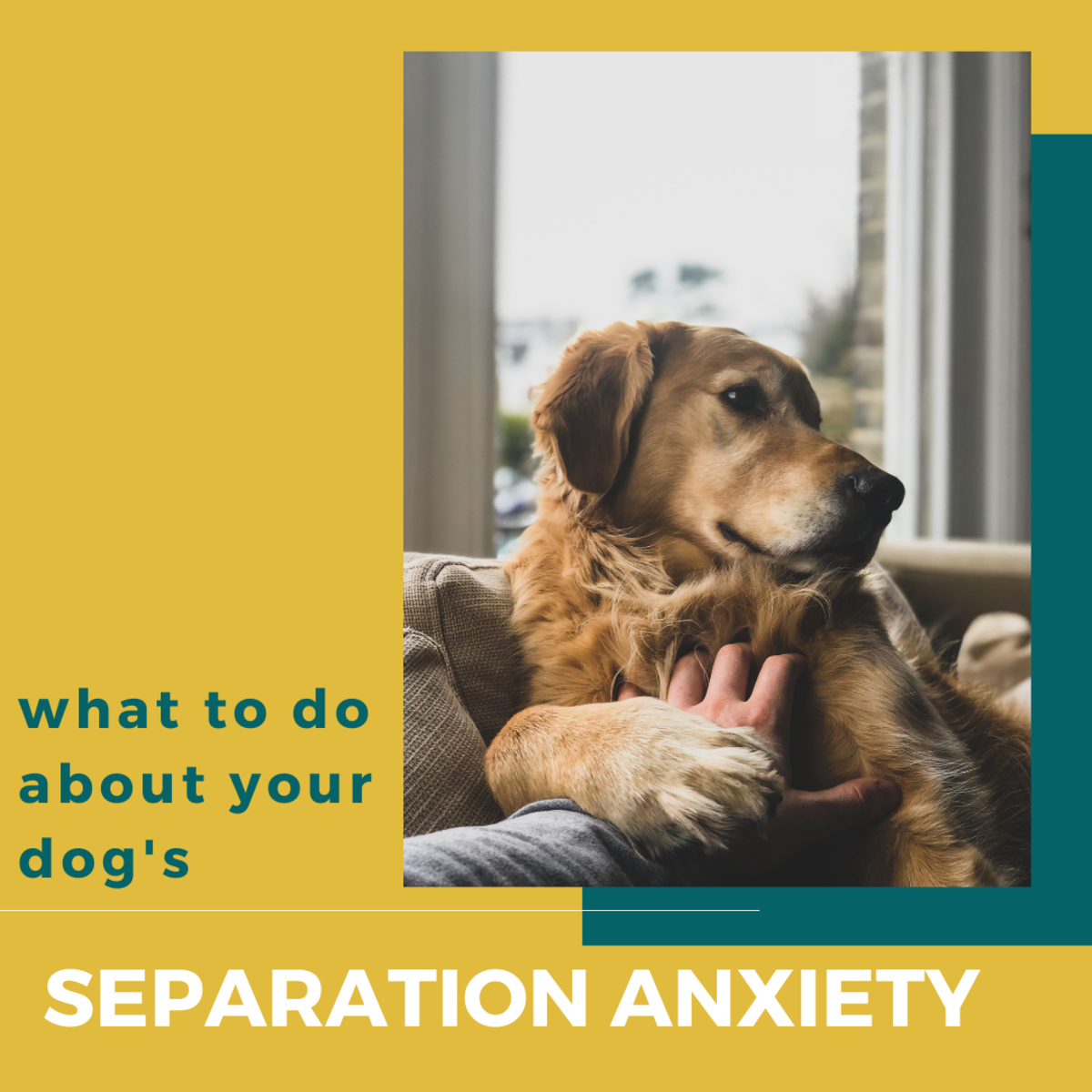 Separation anxiety can be extremely taxing for both you and your dog. Learn how to identify it and prevent it from happening in the future.