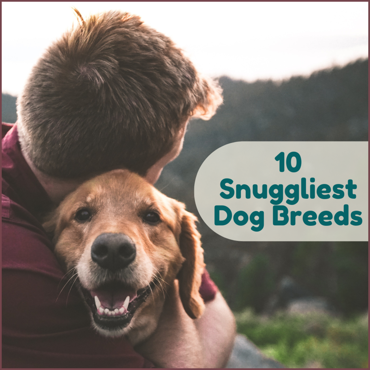 If you're looking for a dog that will happily accept every hug you have to give, this list is for you!