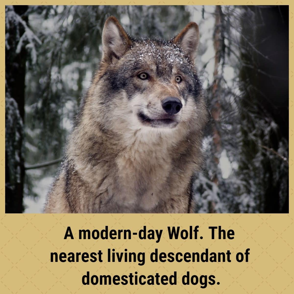 natural-breeds-of-dog-explored
