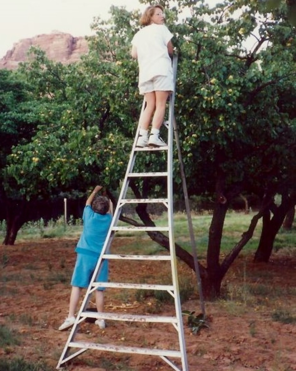 Photo of my mother and niece picking apricots in Fruita, Utah.