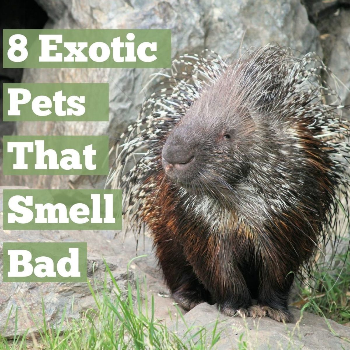 When it comes to traits that make certain animals desirable as pets, the lack of an offensive odor tends to rank fairly high.