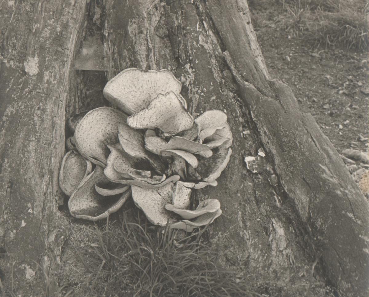 Texture of fungi