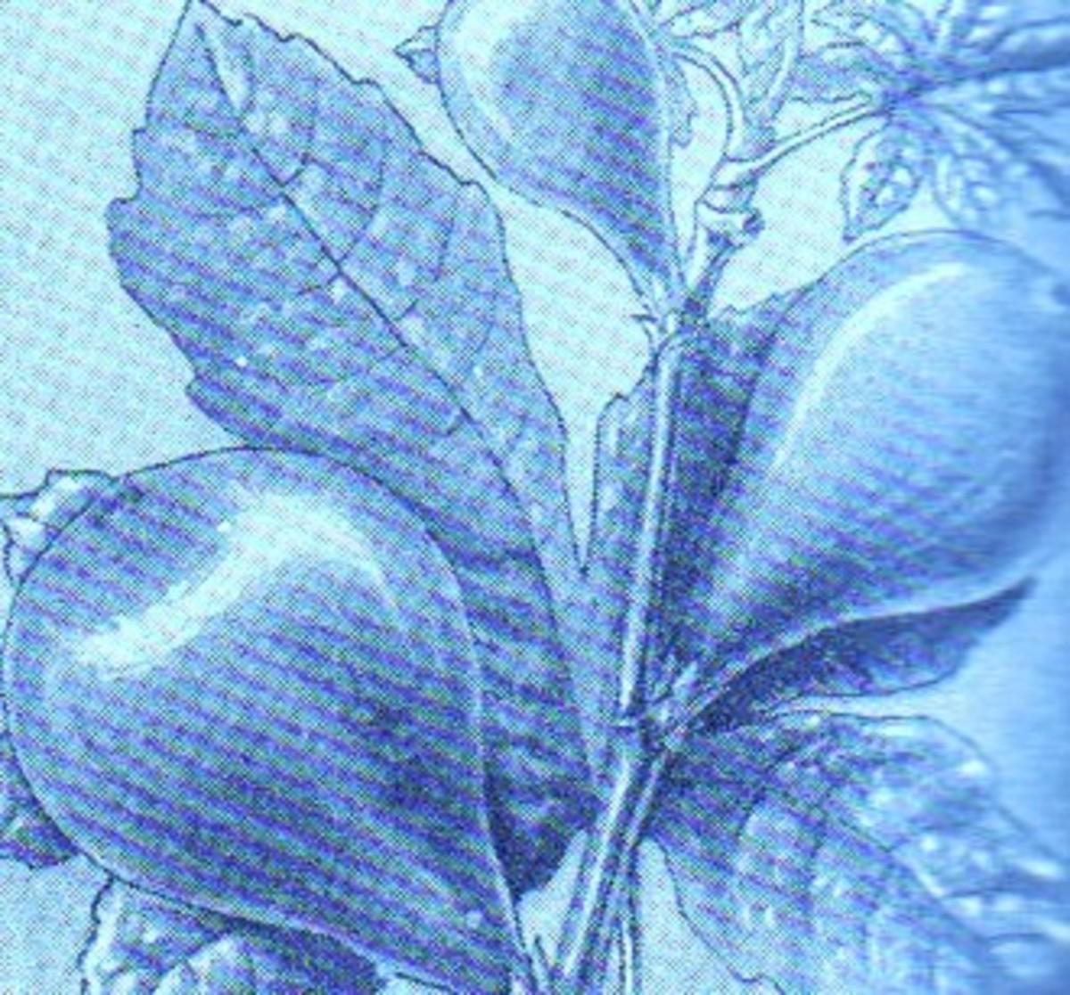 Figs Vs. Dates