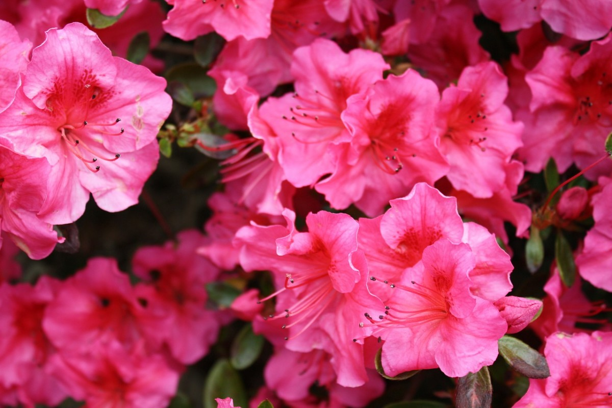 Every garden must have bright decorative speckles of flowers