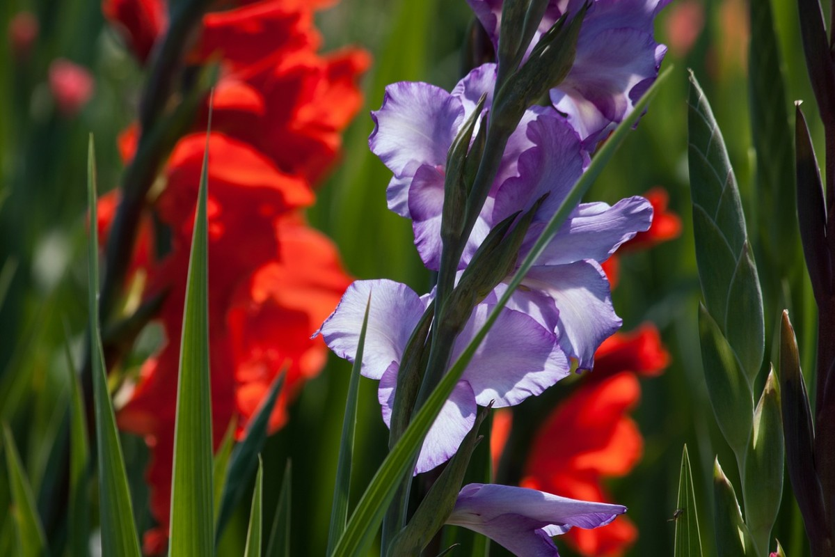some-indian-flowers-and-garden-soil-preparation