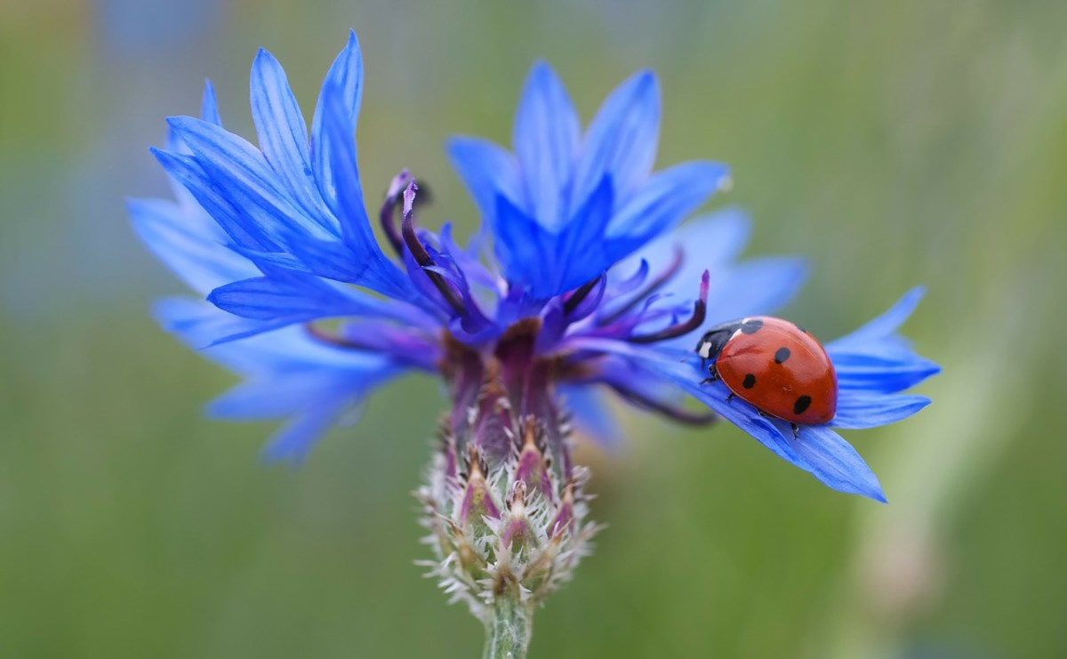 Bright colored flowers attract insects and butterflies that help pollinate