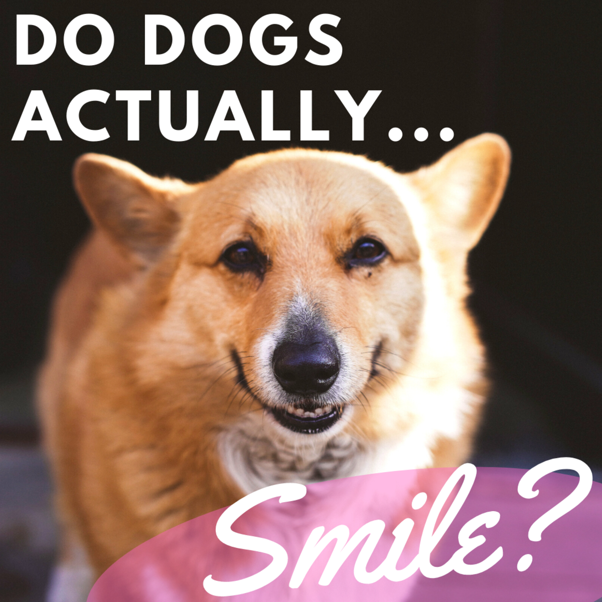 Is it true that dogs can smile?
