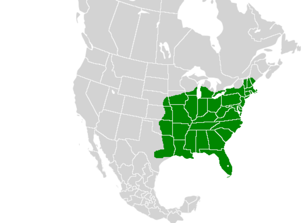 Map of North America showing the spicebush swallowtail's range.