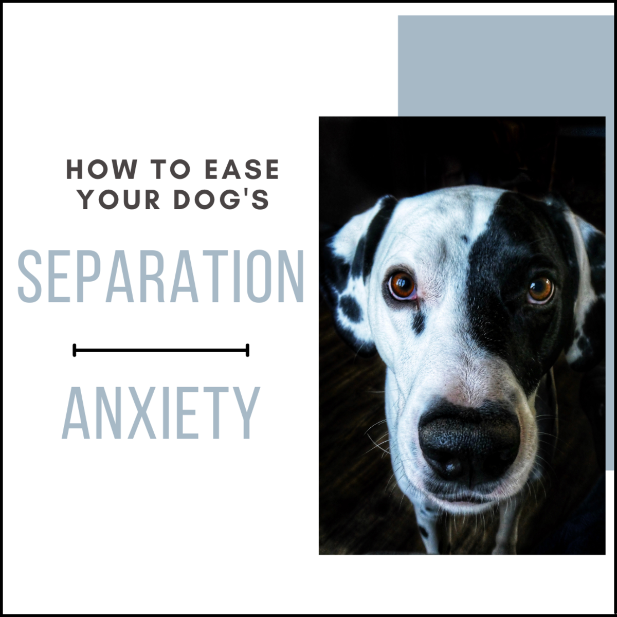 The following tips will help you deal with your dog's separation anxiety.