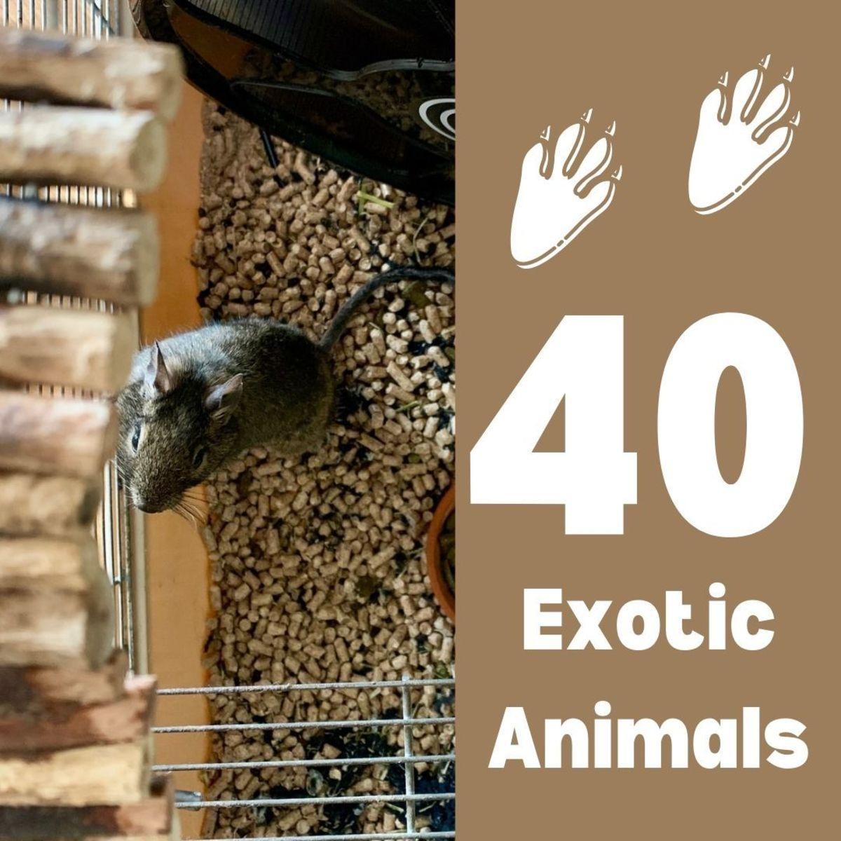 40 Rare and Unique Exotic Pets (2021 List)