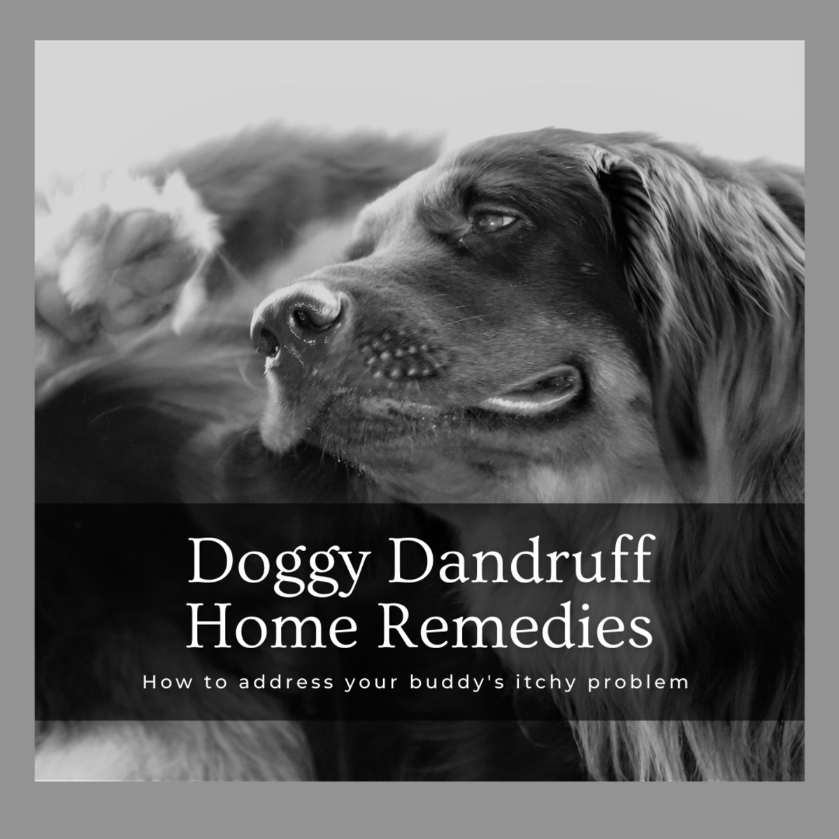 This article will provide a number of ways for you to help treat your dog's dandruff through various home remedies.