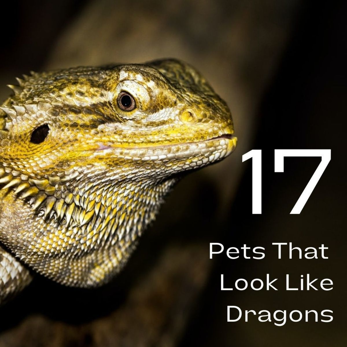 17 Pets You Can Legally Own That Look Like Dragons