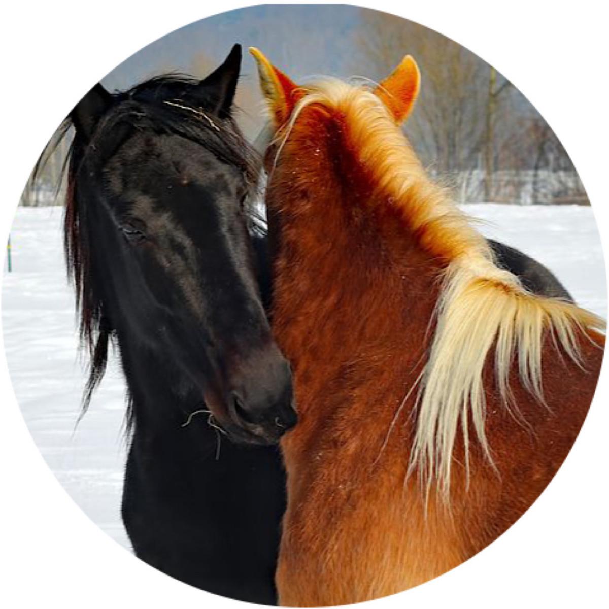 Horses in-love