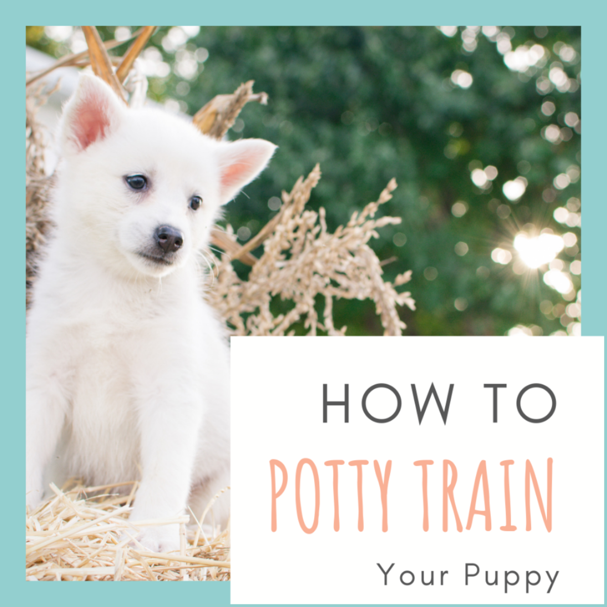 Potty training your puppy is hard work, but the right strategies will make it a lot easier.