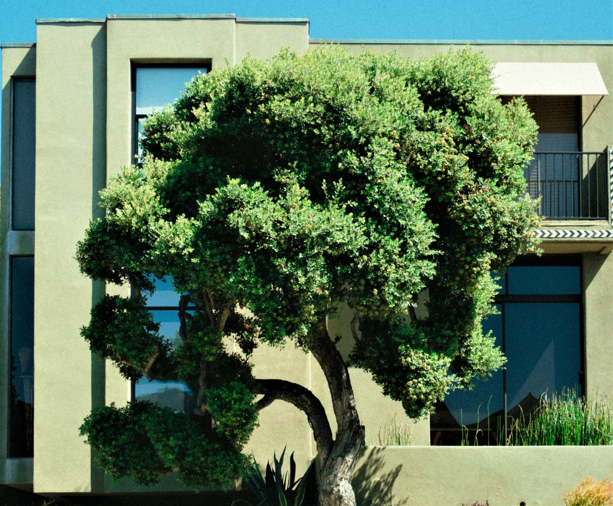 Are there trees whose presence provides access to windows at certain levels?