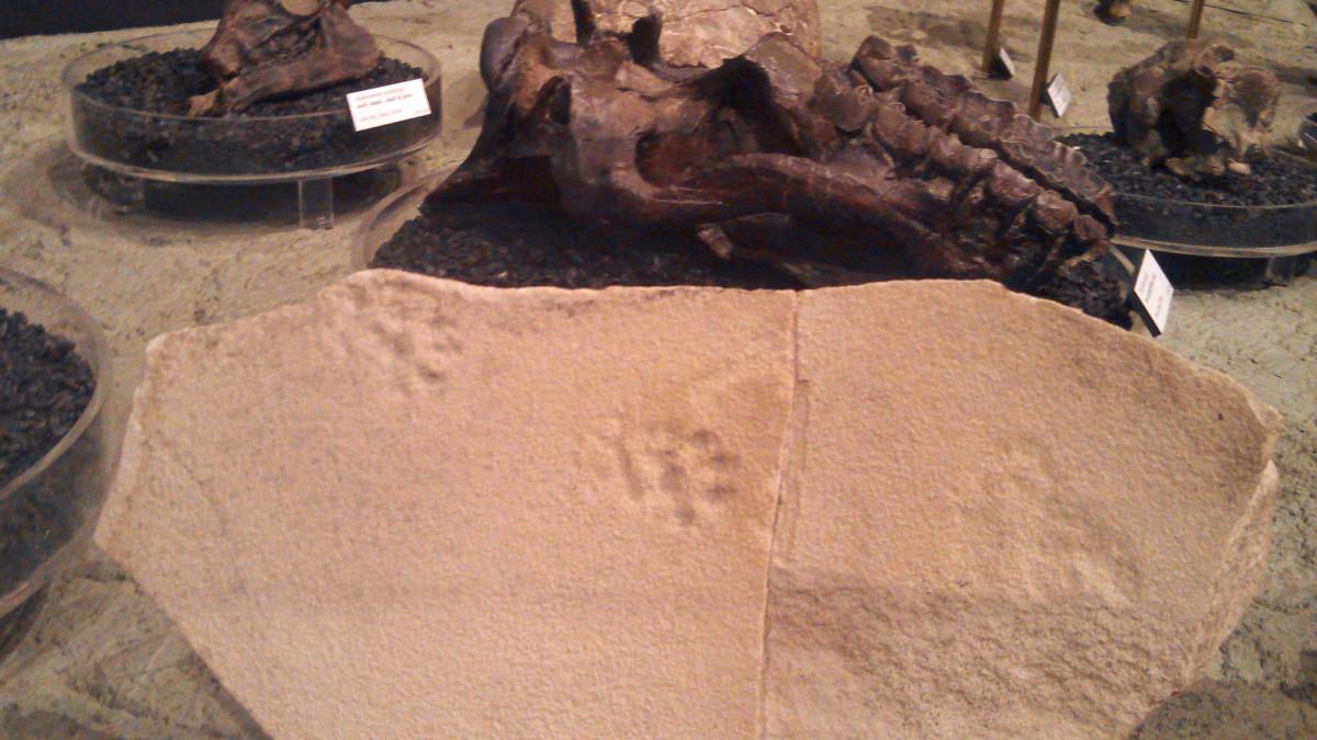 Animal tracks frozen in time.