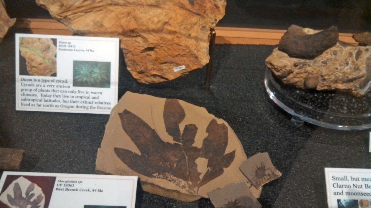 One of many exhibits of fossils.