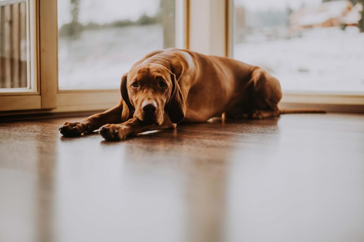 How Do I Treat Diabetes in My Dog?