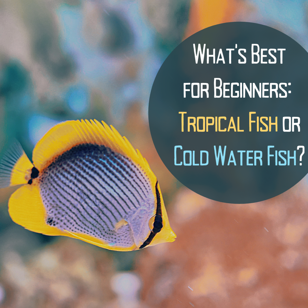 If you're new to fish-keeping, get some advice on where to start. You may be surprised by the answer (tropical fish)!