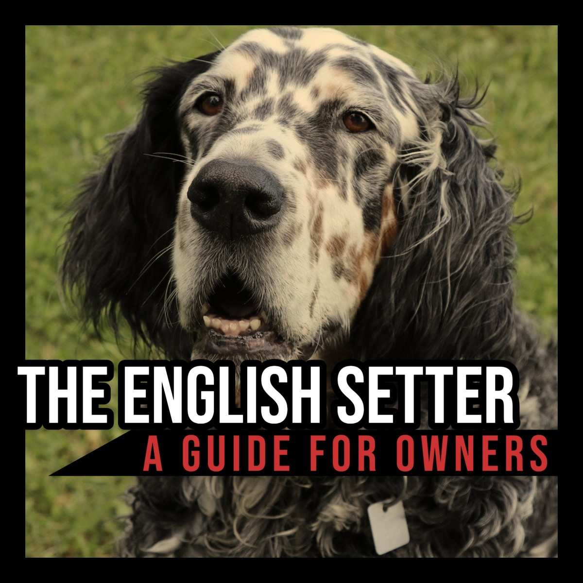 The English Setter: A Guide for Owners.