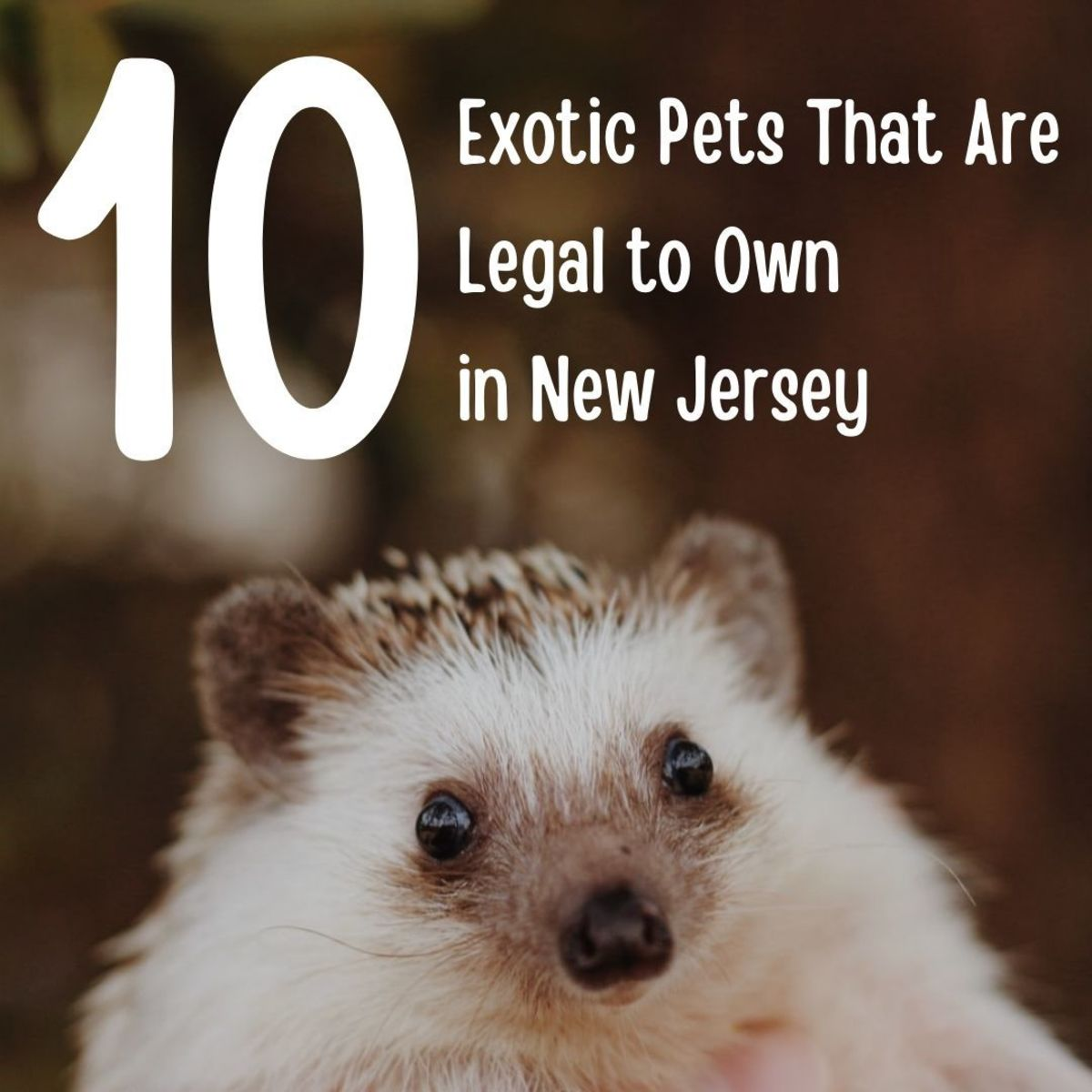 No two states are alike when it comes to the rules for keeping exotic pets.
