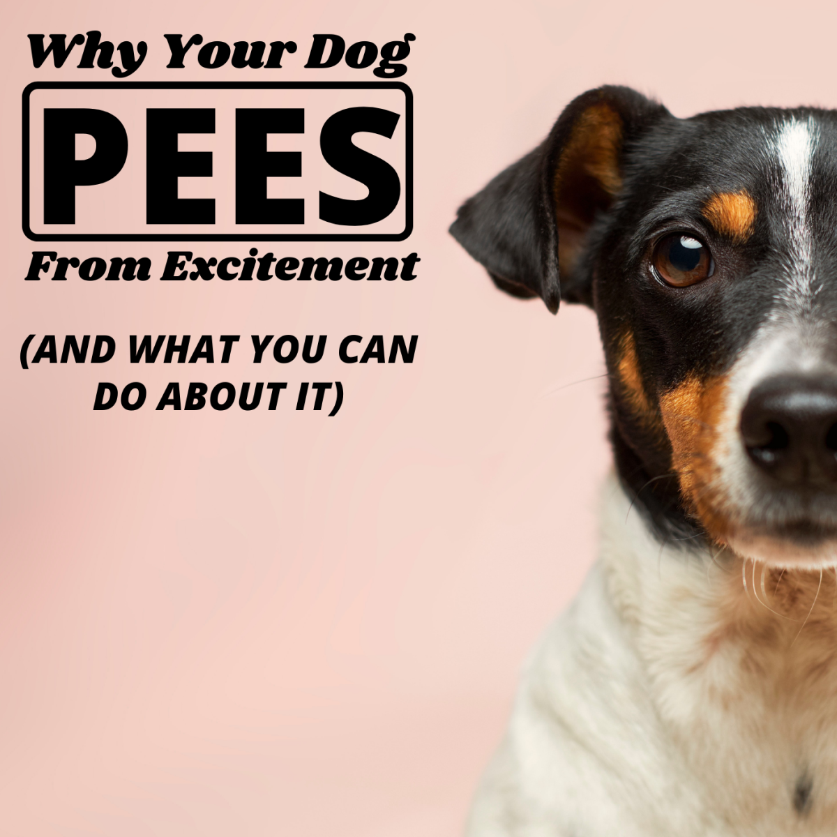 Some dogs urinate when they get excited, but this behavior can usually be eliminated with time.