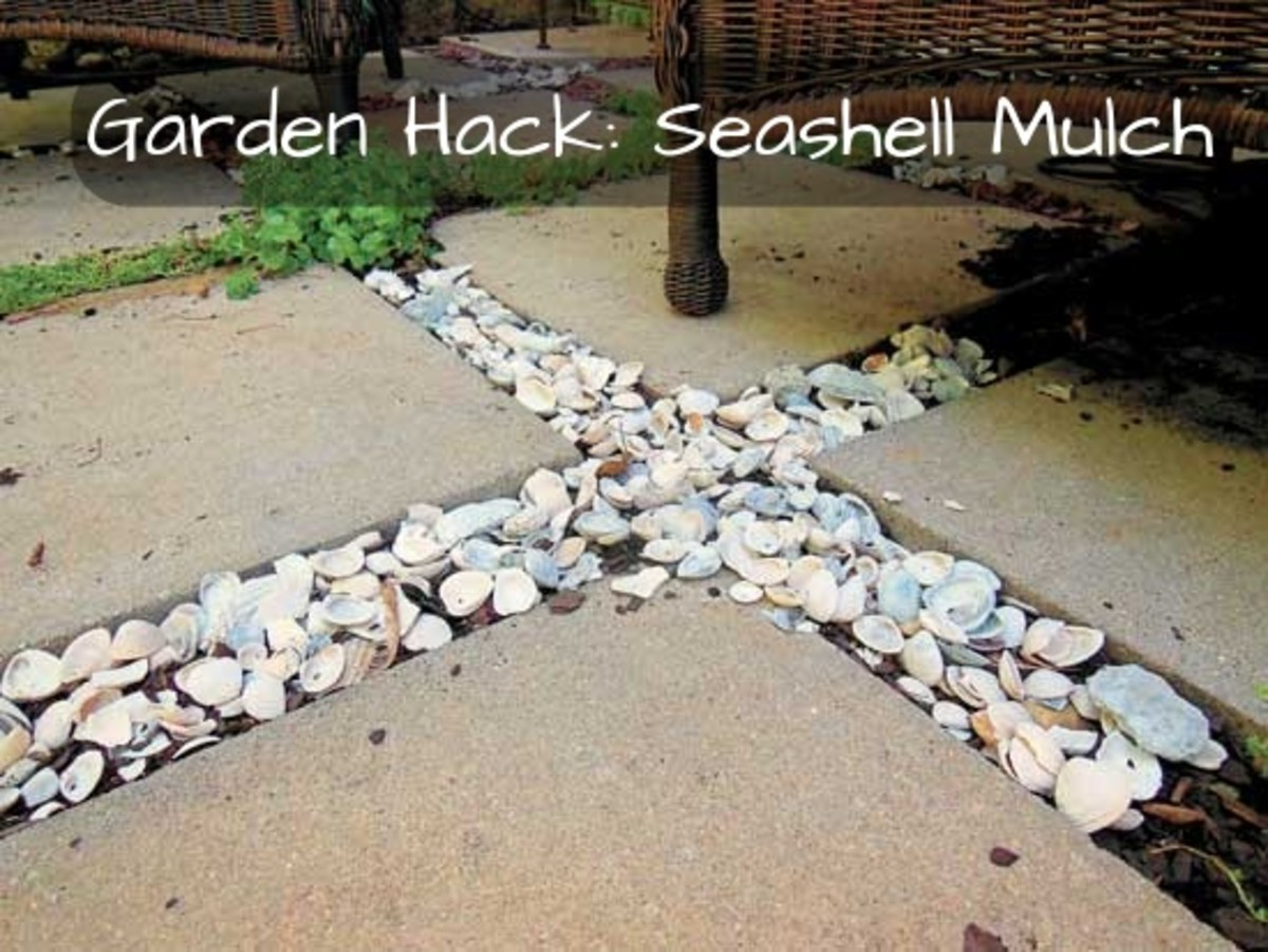 The perks of seashell mulch: (1) it takes a long time to decay, (2) it prevents the spread of weeds, (3) it adds calcium and other nutrients into your garden, (4) it's inexpensive, (5) it gives off beach vibes