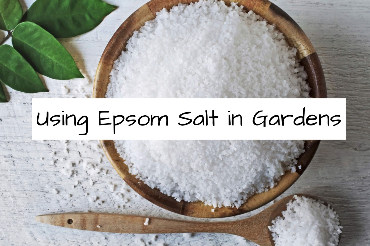 Use epsom salt in your garden for plants that crave more magnesium. Check your magnesium levels in your garden before you start using.