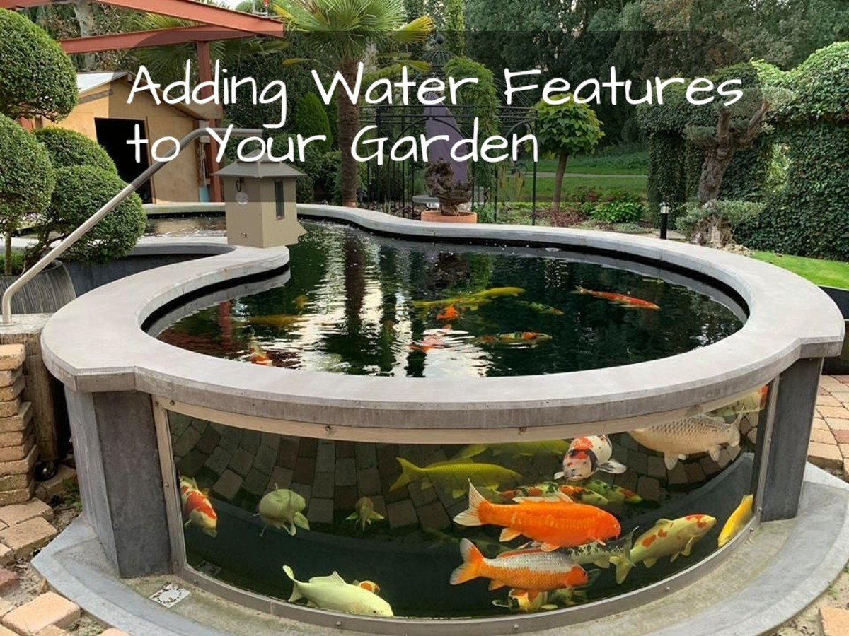 Is it really a Cancer garden without water features? A koi pond is an excellent choice for designing a garden around the zodiacal sign Cancer.