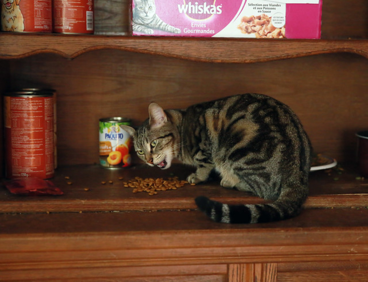 The Pros and Cons of Different Types of Cat Food