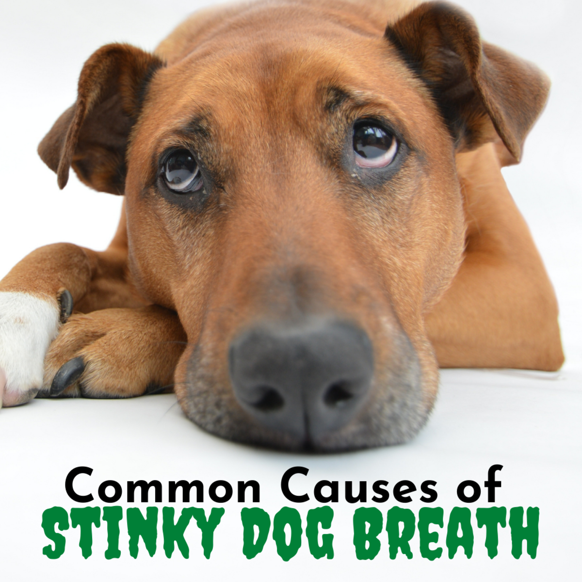 Does your dog have stinky breath? It may be time to take your pup to the vet.