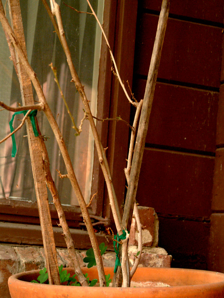No one wants to look at a bunch of sticks in a hanging basket.