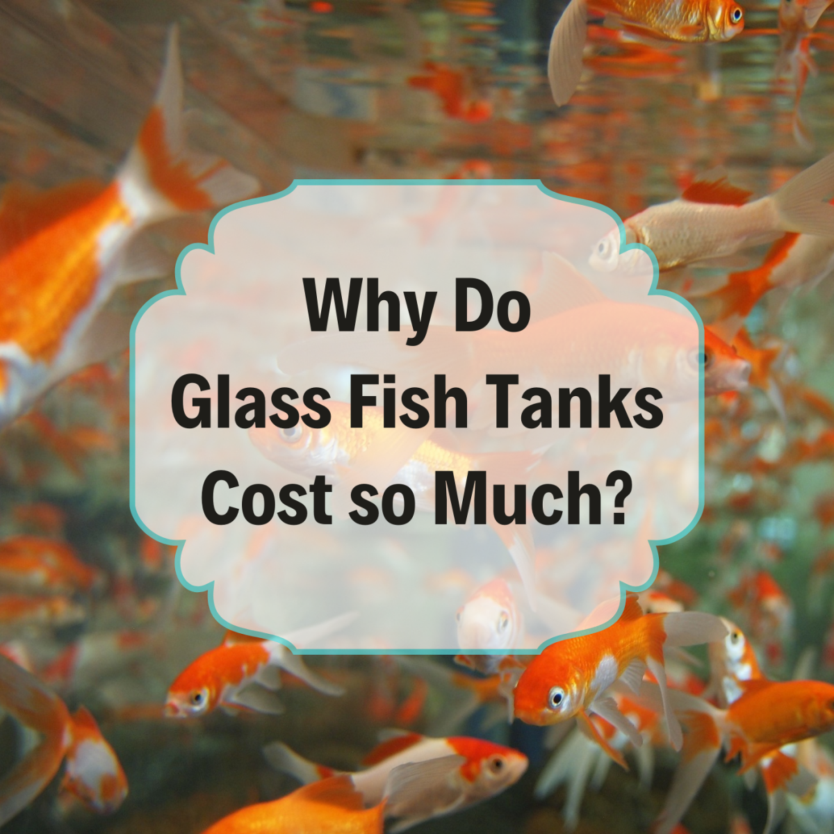 Find out why bigger tanks increase steeply in price.