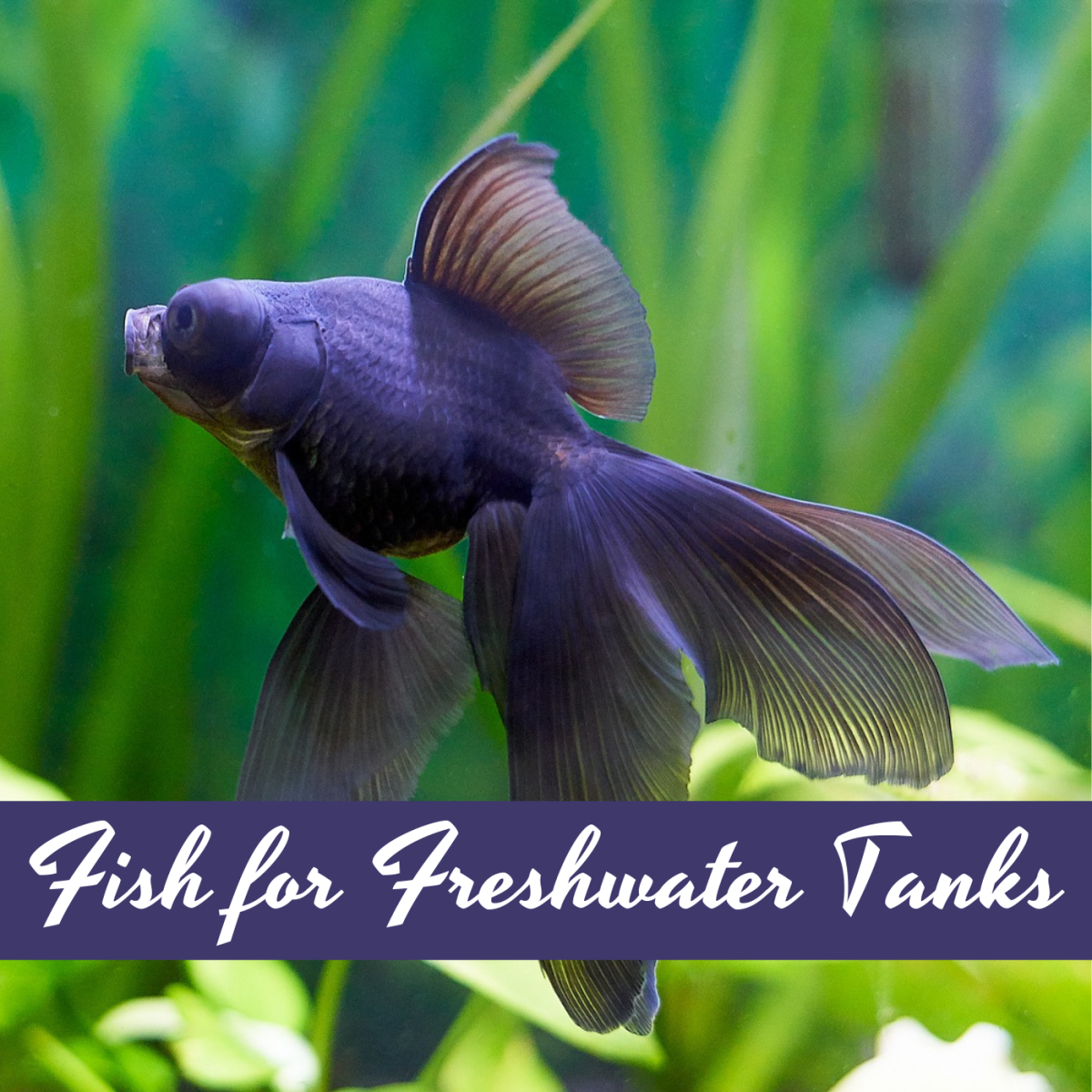 How to Choose Fish for a Freshwater Tank