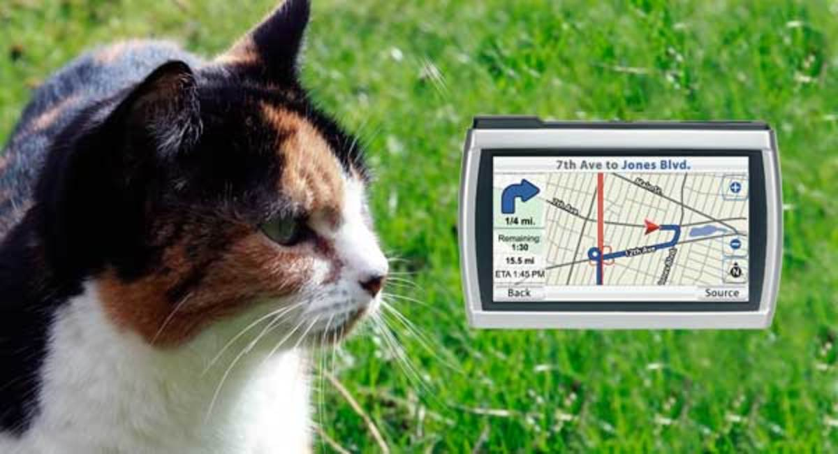 The best GPS cat collar will have full smartphone/tablet/notebook integration giving you updates 24 hours a day 7 days a week