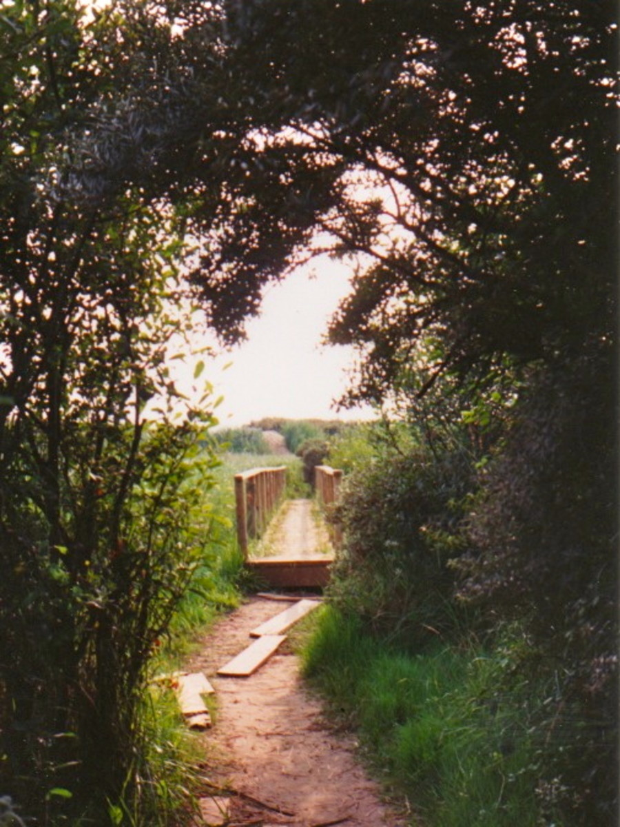 Footbridge across Berrow Marsh