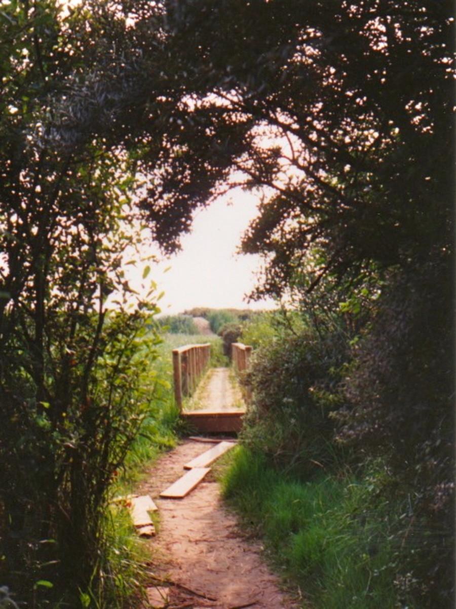 Footbridge across Berrow Marsh