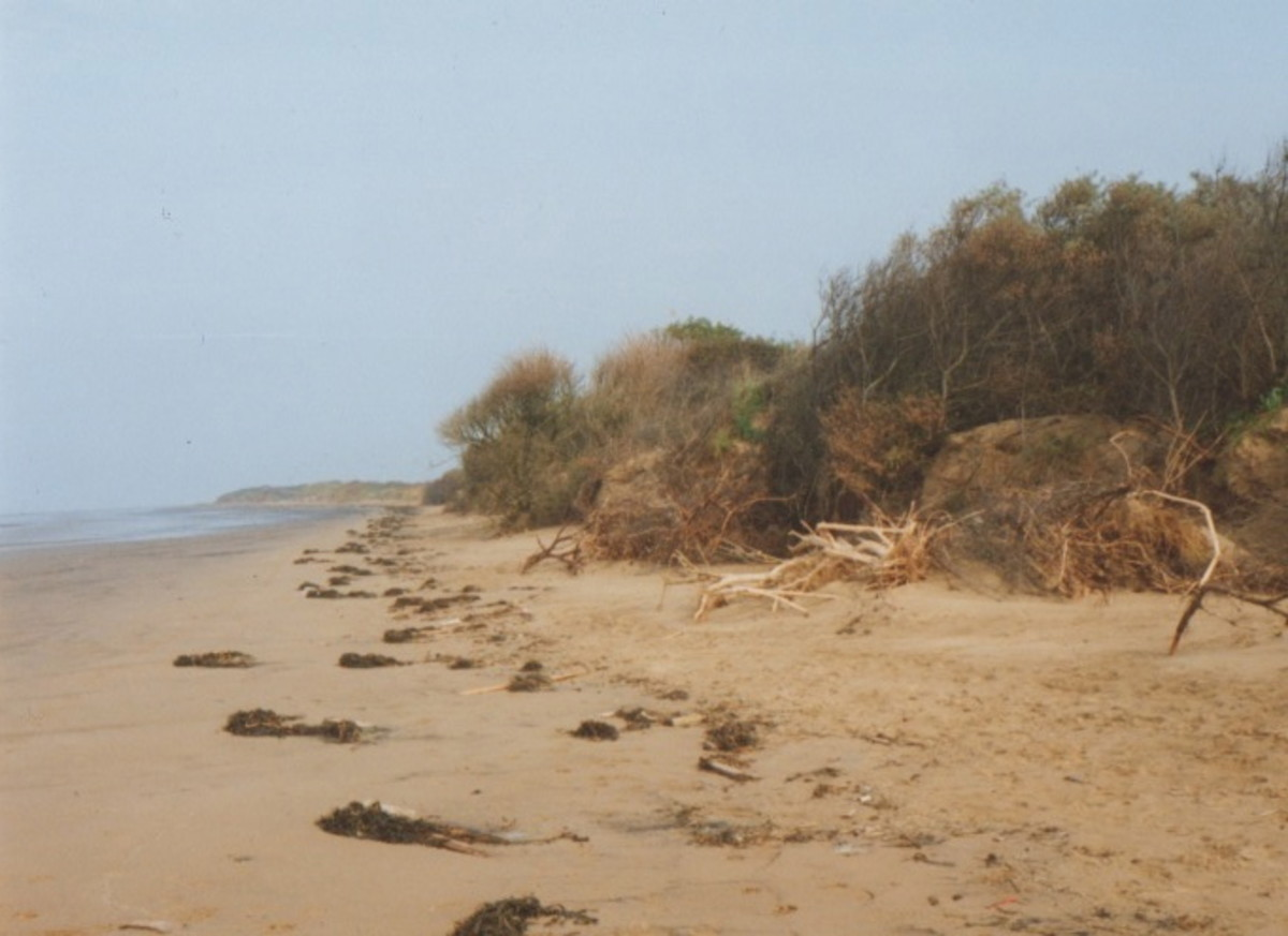 Driftwood & Seaweed on Berrow Beach